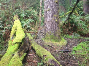 This fallen tree covered in moss was almost fluorescent green!