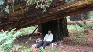 Hanging out under a fallen Redwood Tree and wearing the Montbell Dynamo wind pants during a lunch break to wait out a heavy rain storm.